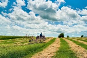 dsc_6409-hay-field-tractor-web-ggrtg-8x-2