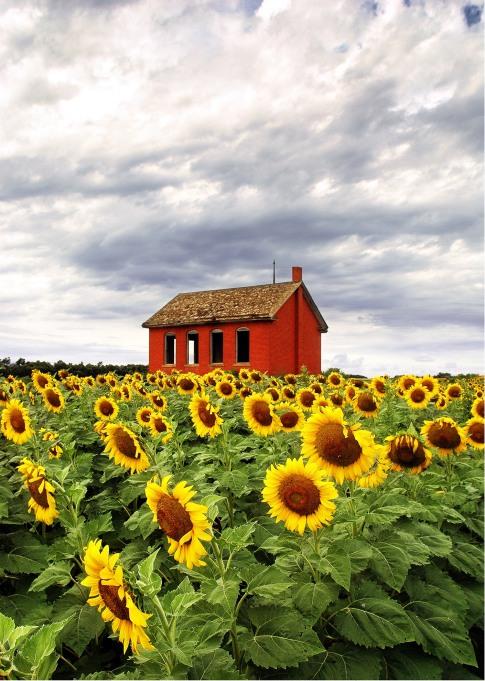 sunflower playground