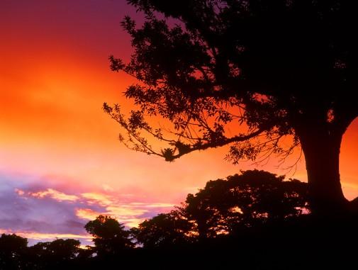sunset50_ fweb REDO