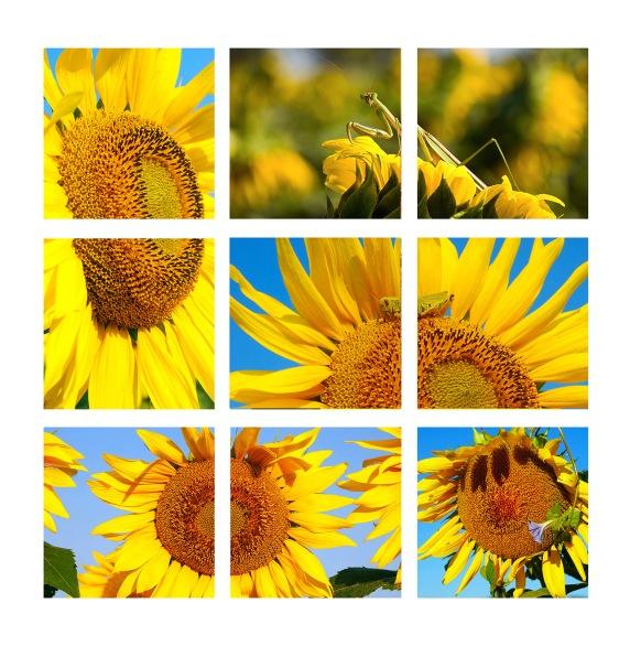 Untitled-1 SUN 9 web fPANELgg