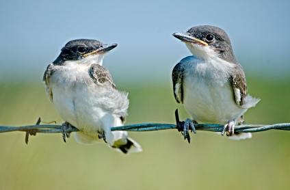 DSC_0219 jjbirds web