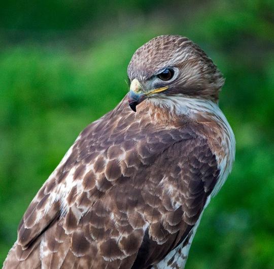 Hawk 4 web jpg