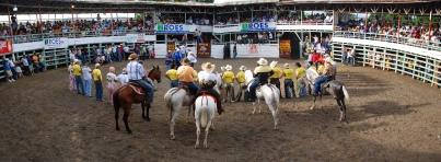 bull show web 2831-2 nn